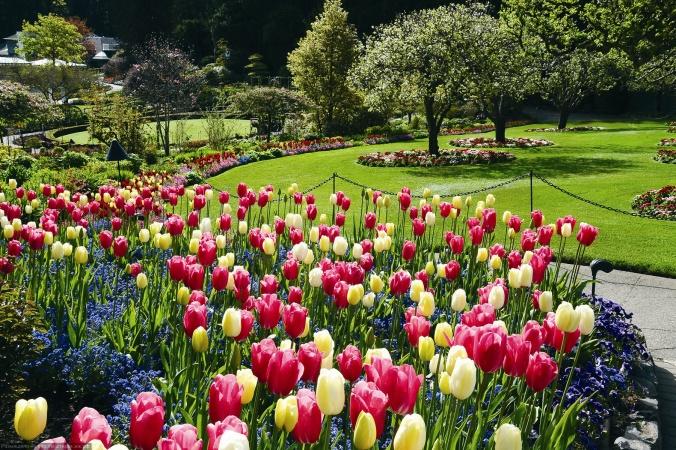 blooming-springtime.jpg